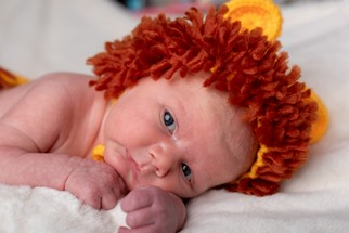 Newborn Baby in Lion Costume closeup - North East portrait Photographer.jpg